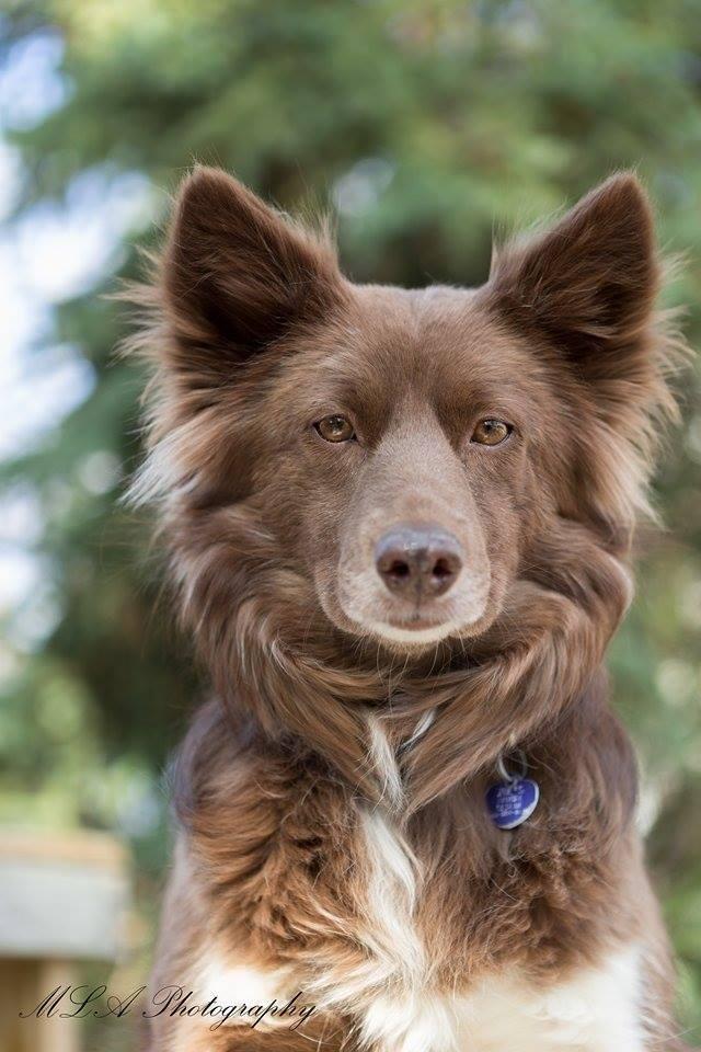 Adopt Rosa On Pet Vet Animals Border Collie