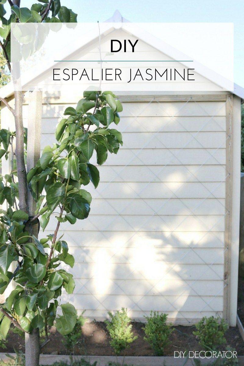 DIY - Chinese Star Jasmine on Espalier Wire | Gardens, Garden ...