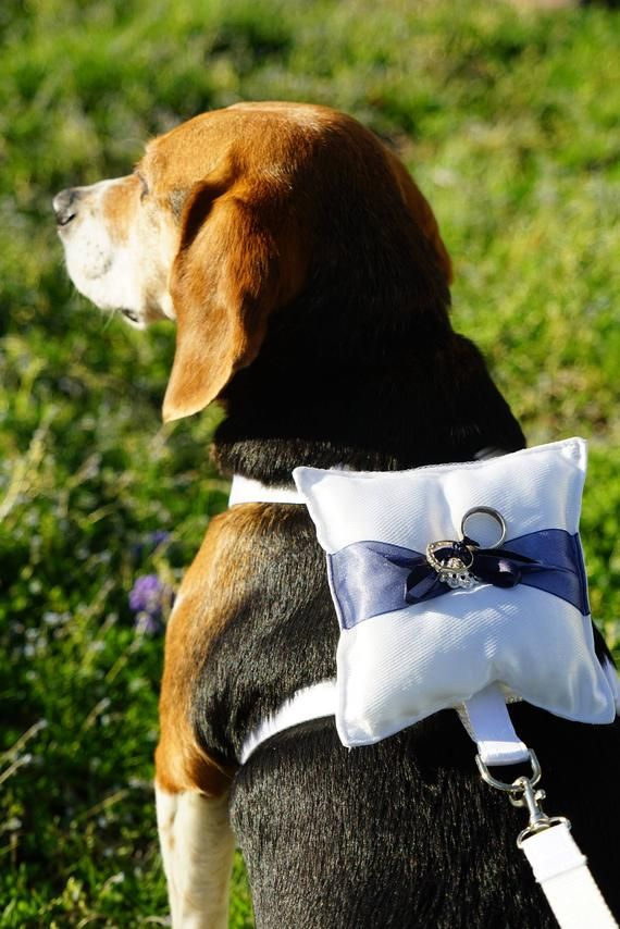This Ring Bearer Dog Harness And Leash With Pillow Is The Perfect