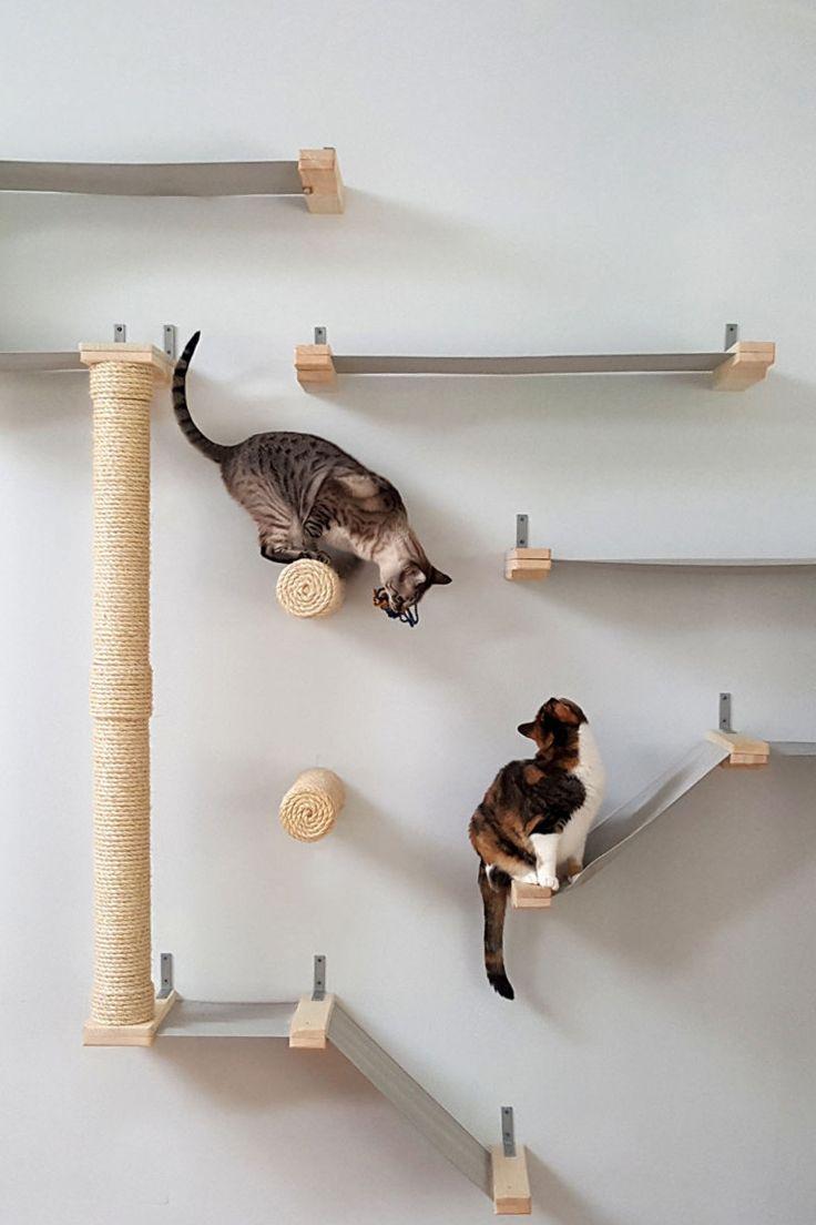 cat run shelves