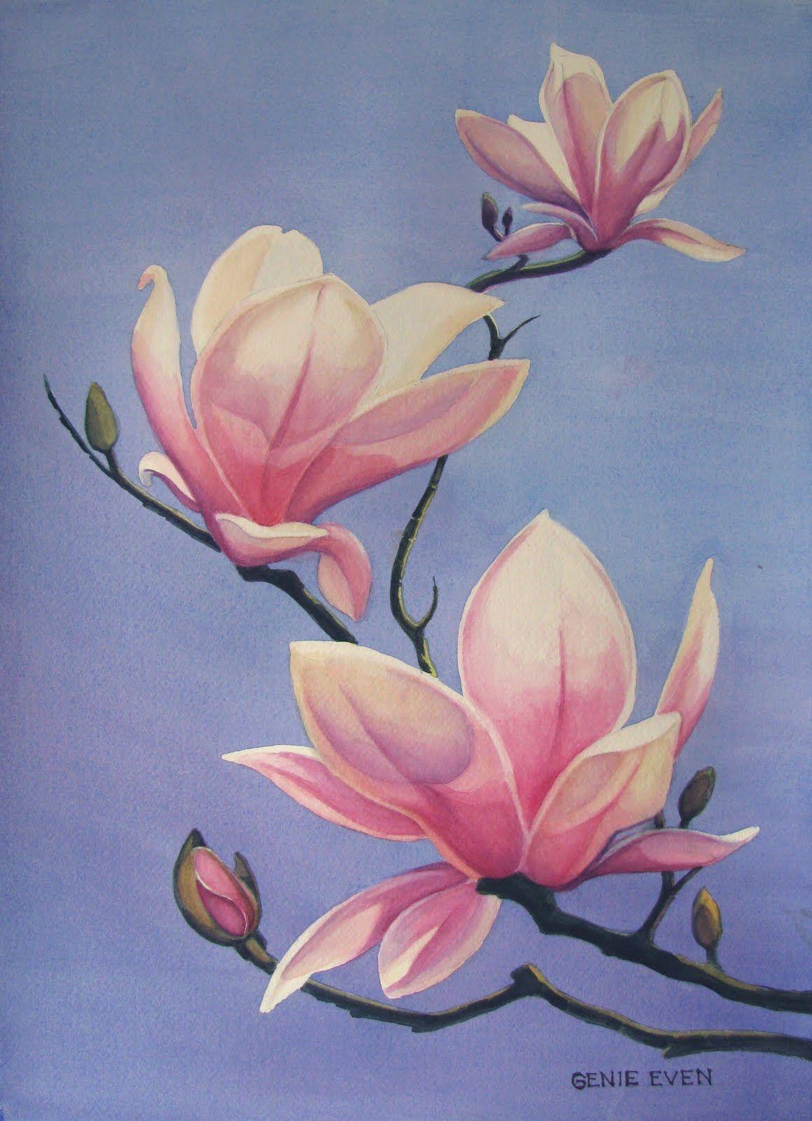 Magnolia Paintings Flower Art Flower Drawing Flower Painting
