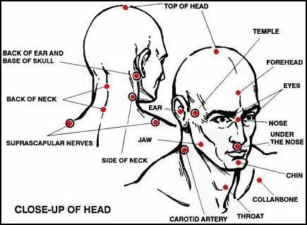 Knockout Pressure Point Chart diagram of the most vital