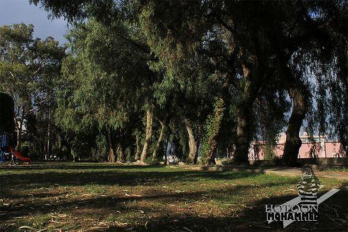 حديقة ابو خيال في ابها Without Edit Country Roads Photography Tree