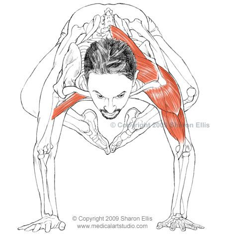 bakasana muscles aren't the inner thighs working here too