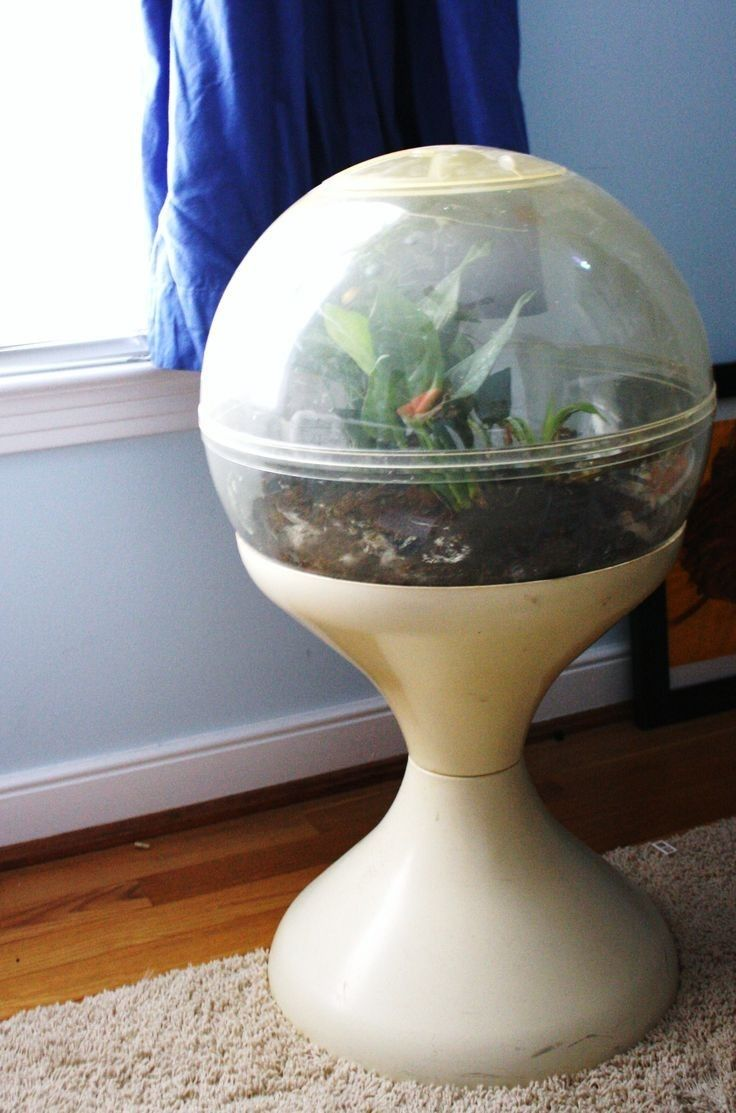 My mom kept a terrarium like this in our living room with some