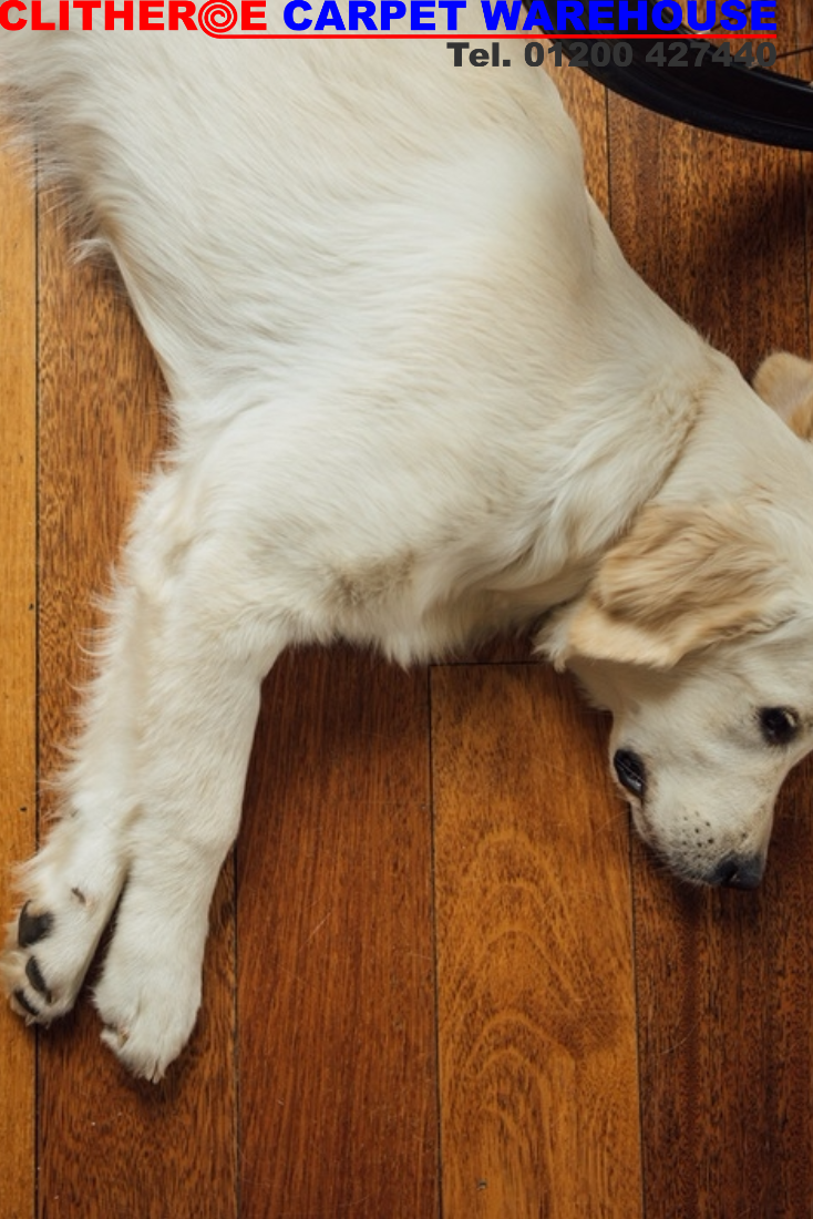 Flooring For Everyone! We Have An Amazing Range In Our Carpet Warehouse