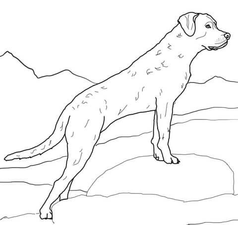 Chesapeake Bay Retriever Coloring Page From Dogs Category Select