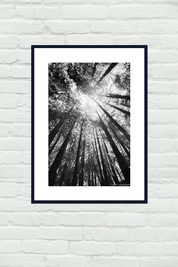 Black and white photography california redwood trees tree photography tree art wall decor 8x10 8x12 11x14 16x24 print black rain