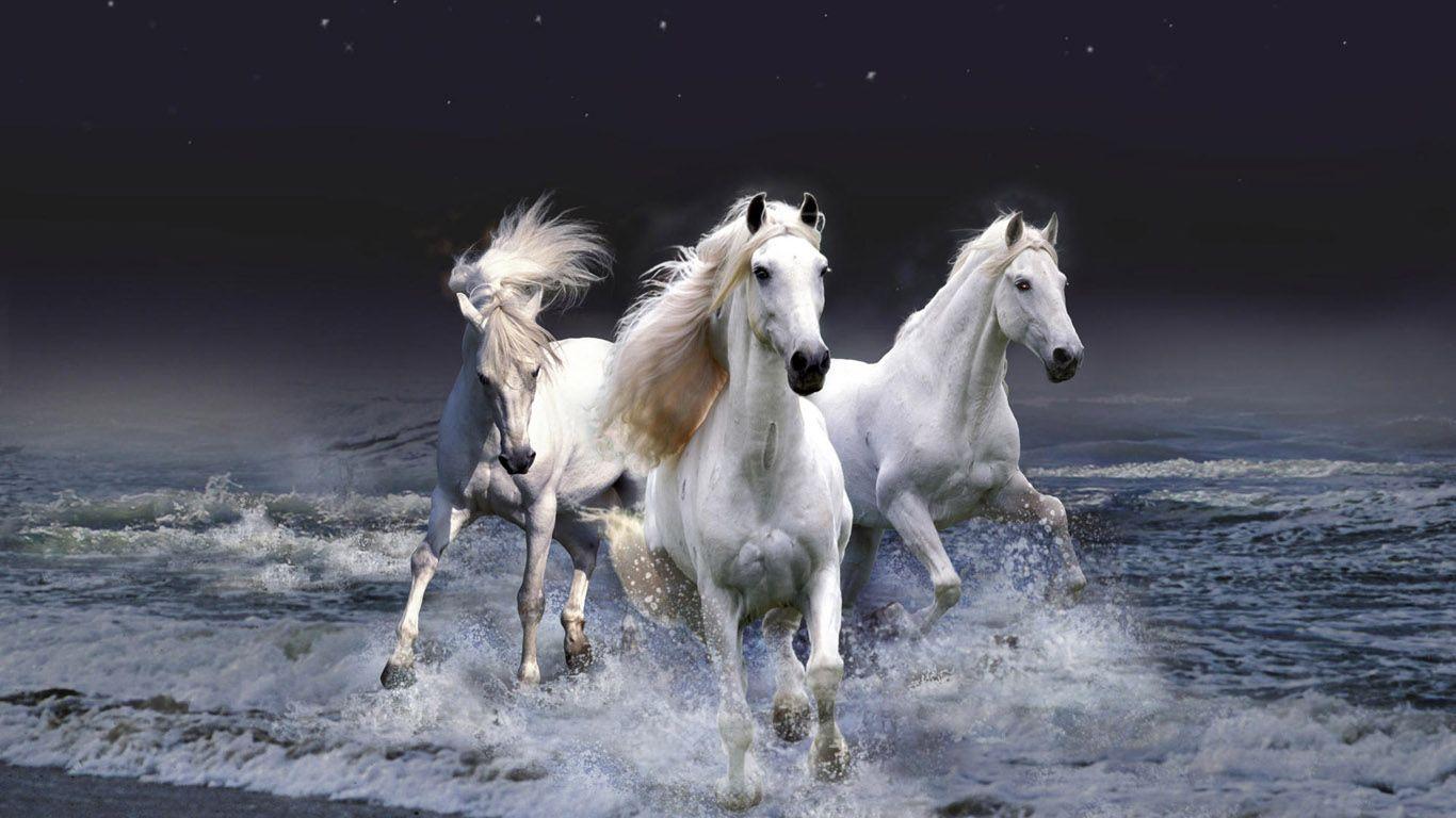 Beautiful Animals Hd Wallpapers Jpg 1366 768 Cavalo Wallpaper Cavalos Corredores Caes Perigosos