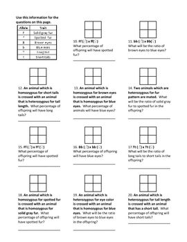 Genotypes And Punnett Square Worksheets Life Science Middle School Punnett Square Activity Genetics Lesson