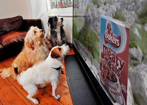 Pet Food Company Barkers Are Launching A Tv Advert Tonight For