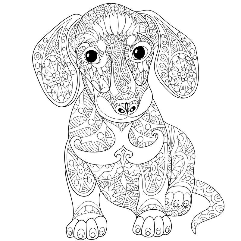 image result for adult colouring zentangle  dachshund