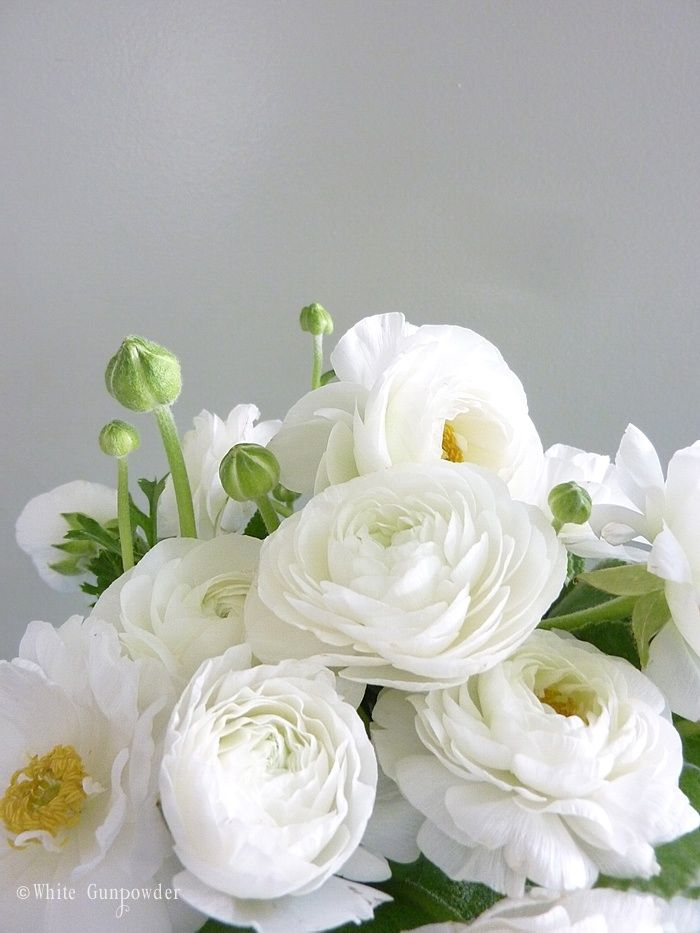 Wonderful list of white flowers images images for wedding gown ranunculuskeeping these all over my must have wish list love this mightylinksfo Image collections