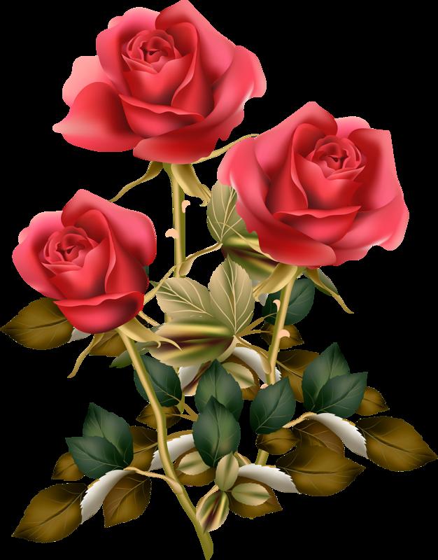 Розы | Цветочное искусство, Цветочные картины, Фотографии ...
