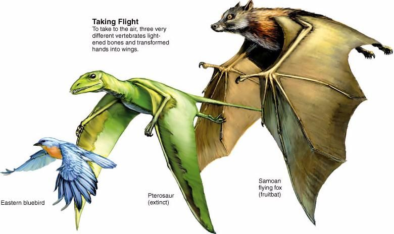 Homologous Convergent Evolution Evolution Activities