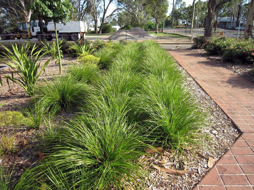 The Breeze Front Yard Plants Landscaping Around Pool Pool Landscape Design