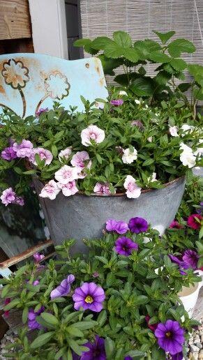 My garden..