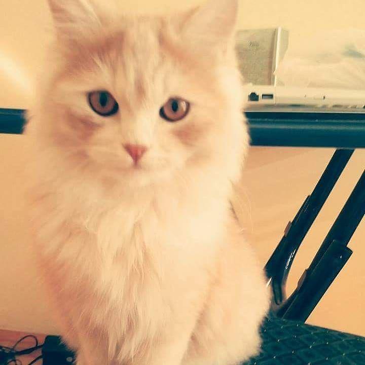 #likeforfollow Mimi the #cat