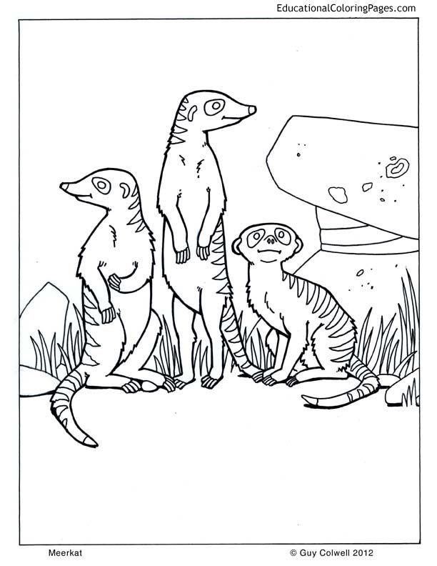 Meerkat Animal Coloring Pages Animal Sketches Meerkat
