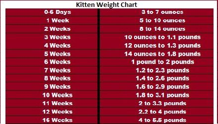 kitten weight chart (With images) Weight charts, Cat
