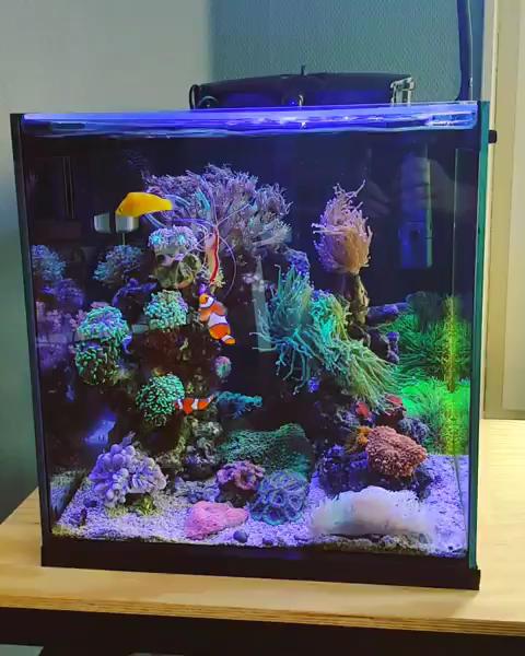 Awesome Nano Reef Tank Life Video Saltwater Fish Tanks Nano Reef Tank Saltwater Aquarium Tanks