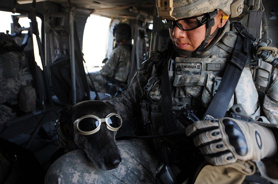 Not every one of our dogs has the stress that a military
