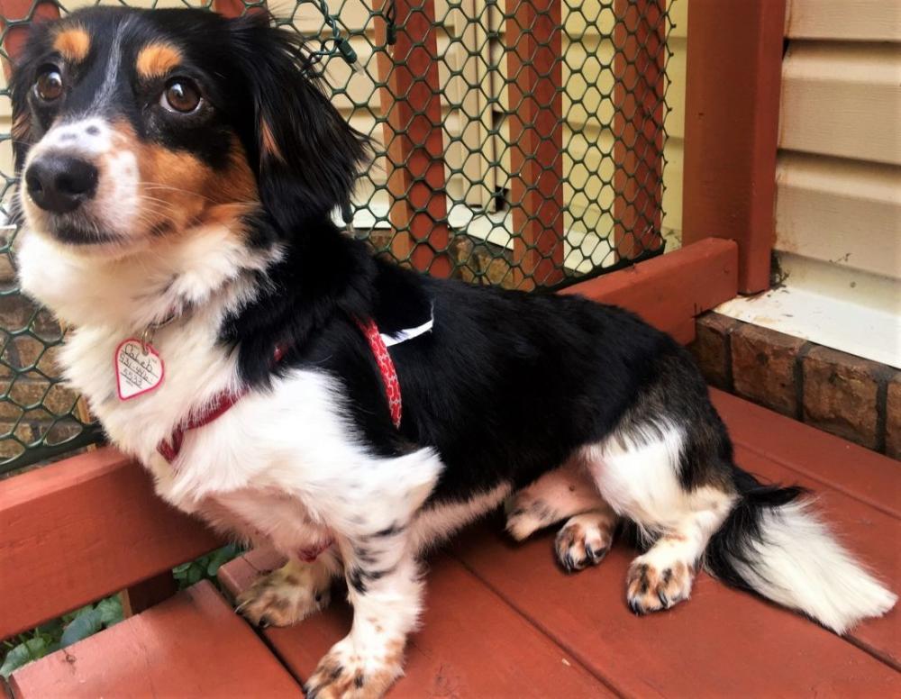 Adopt Caleb In Tn On Pet Dogs Dogs Dog Adoption