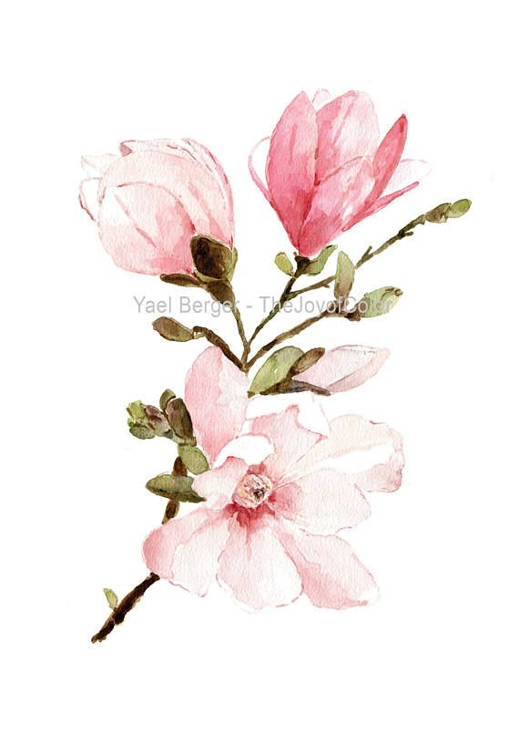 Magnolia Watercolor Painting Mongolia Flowers Watercolor Pink