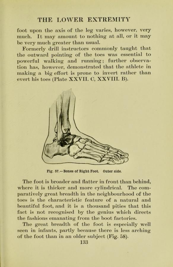 Bones of right foot, outer side, from \'Human anatomy for art ...