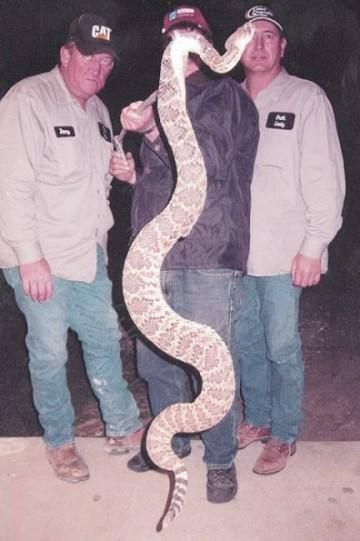 clay county snake wv pinterest clay county clay and