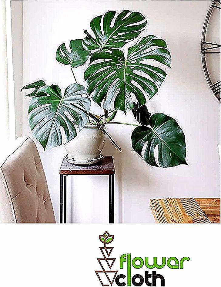 Tersedia juga ☑️Pot bunga keren ☑️Rak bunga minimalis. ☑️Dekor rumah atau kamar lebih simple ☑️Berbagai macam kaktus. ➖➖➖➖➖➖➖➖➖➖➖➖➖➖➖➖ DM for more info 😁😁😁 @flowercloth_  @flowercloth_  @flowercloth_ ➖➖➖➖➖➖➖➖➖➖➖➖➖➖➖➖ . 📞 085743881665 #tanamanindoor #monstera #tanamanmonstera #daunmonstera #tanamanhias  #kayamanfaat #kaktus #suculents #suculentas #scullent #sculent #seculent #dekorasikamar #dekorkamar #dekorrumah #kaktus #dekorrumahminimalis #dekorcafe #homedecor #homesweethome  #bunga #dekor