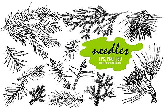 Hand drawn needles by Alena Kaz on @creativemarket