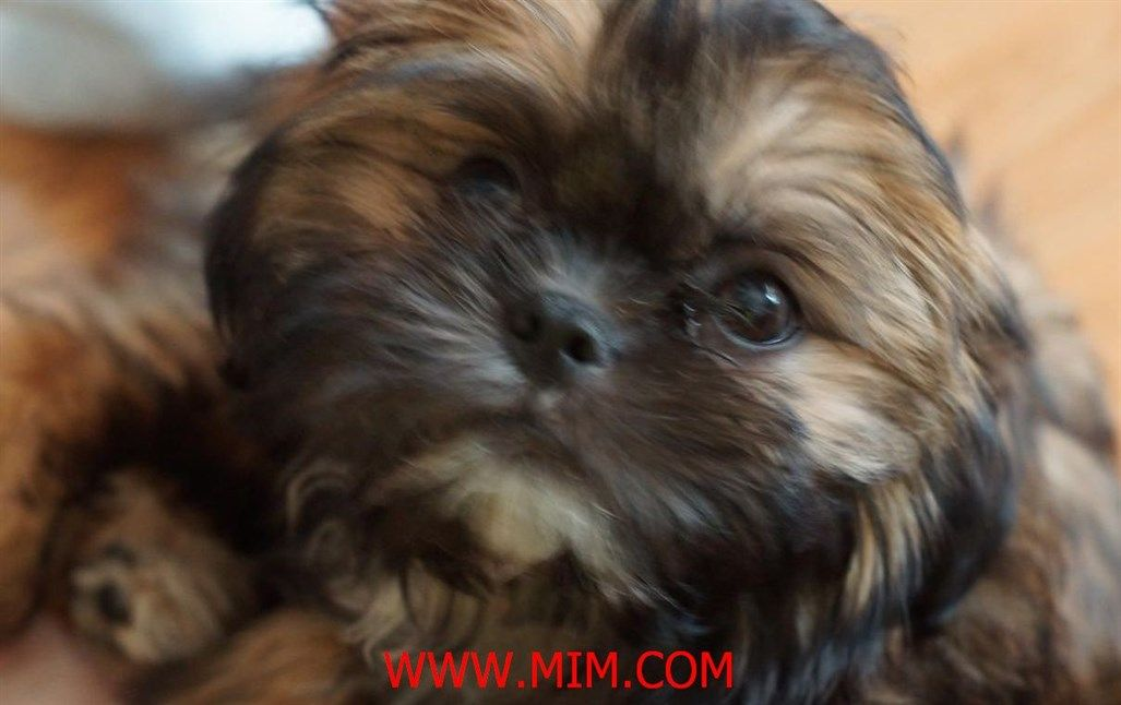 Pin On Dog Breed Groups Mim
