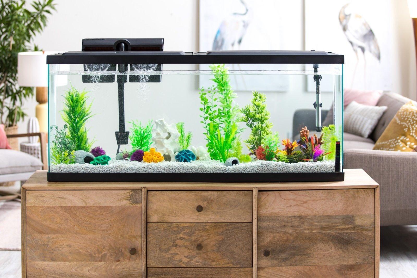 aquariums outreach team worked - HD1600×1067
