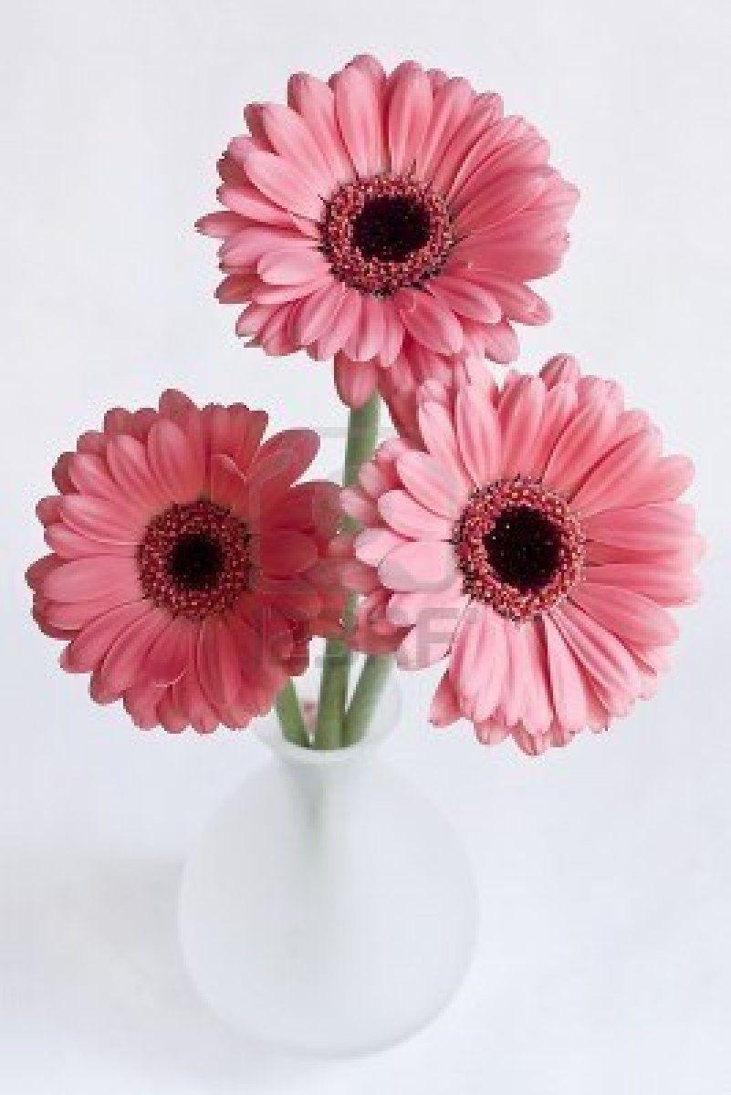 Lo Ame Gerbera Flower Arrangements Beautiful Flowers
