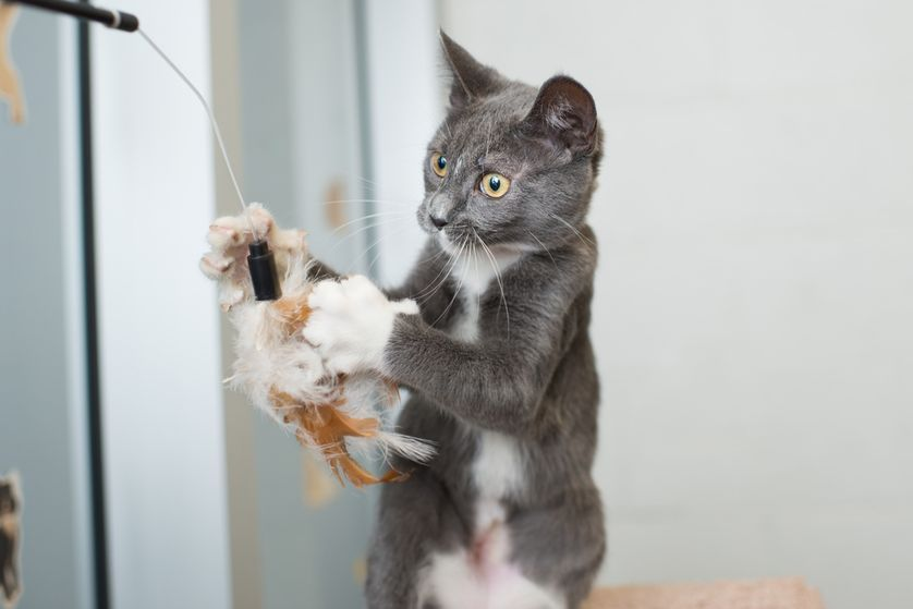 Should You Let Your Cat Outside Cat Care