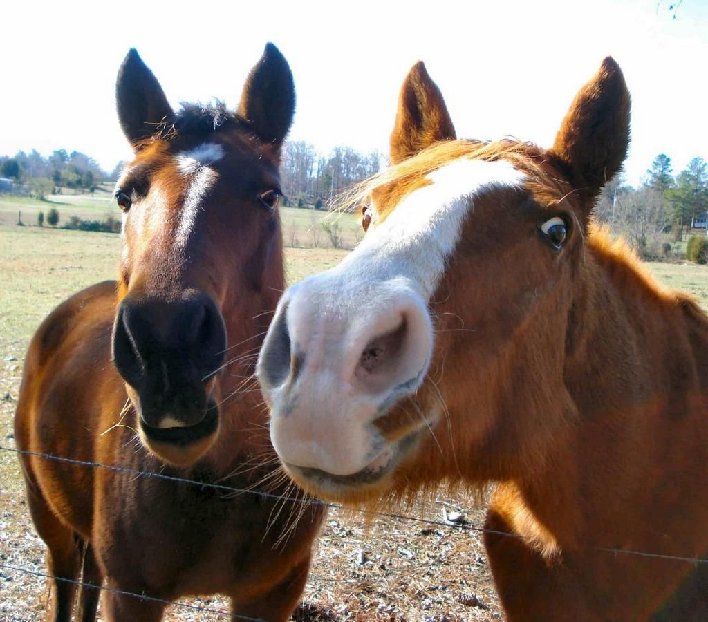 Horses are about as smart as tropical fish. But they read body language and have great memories. pic.twitter.com/HB8o2dkq6E