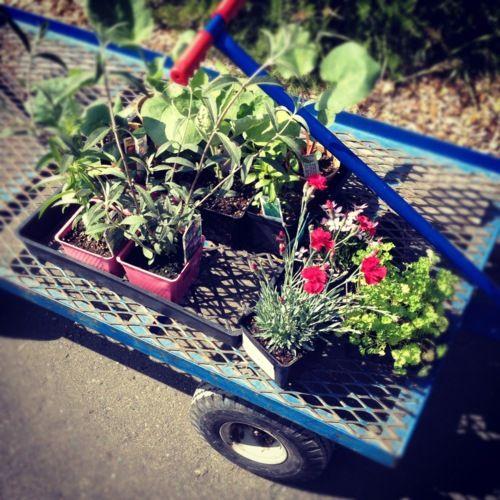 Plant Shopping Via Opa S Garden Garden Outdoor Spaces Plants