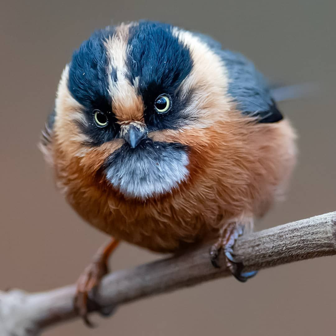 #bird_brilliance: Stunning Birds Photography by Aditya Chavan #smallbirds