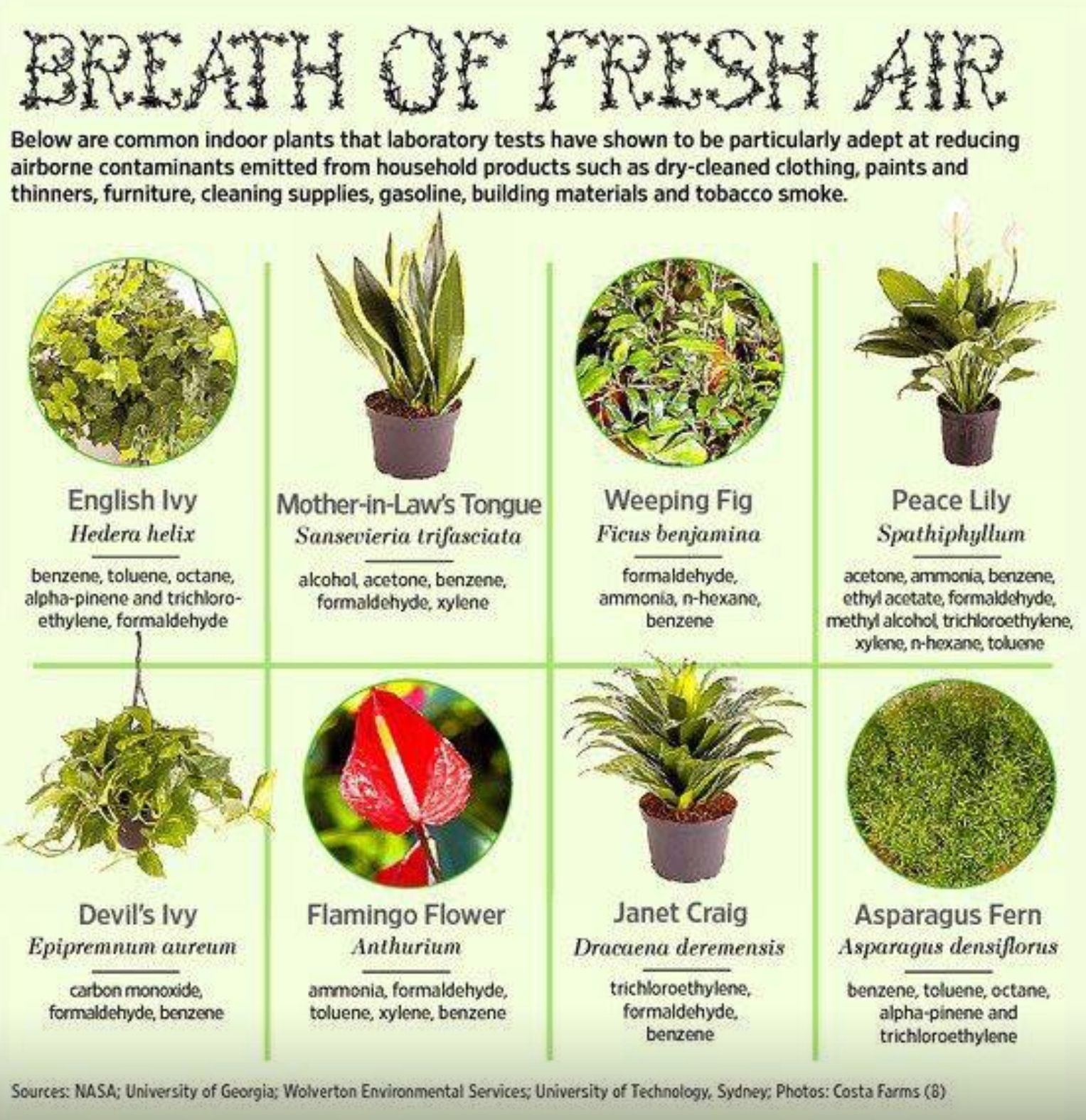 15 Houseplants For Improving Indoor Air Quality House