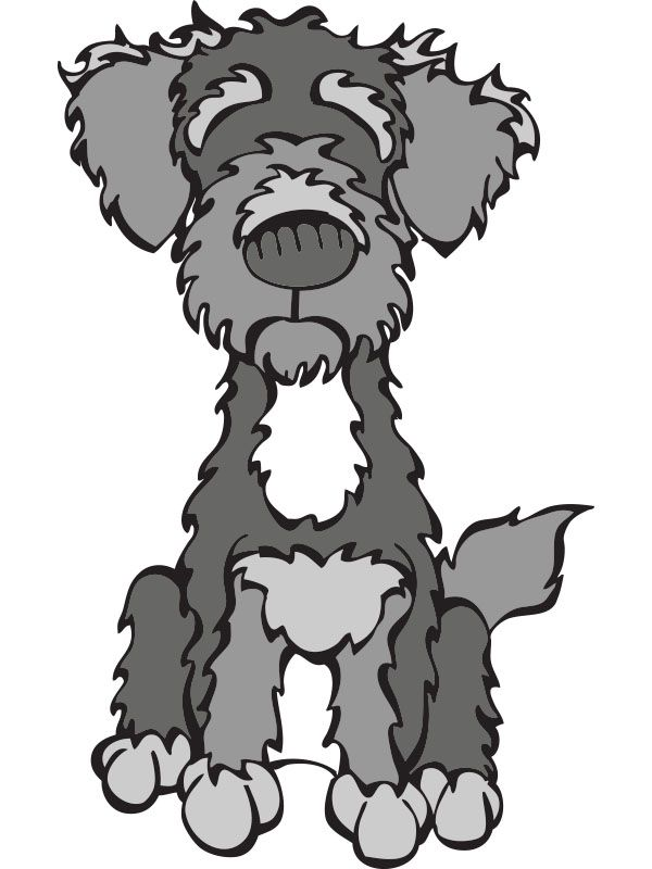 Schnoodle Schnauzer X Poodle Love This Mix Of Dog Breeds Ours