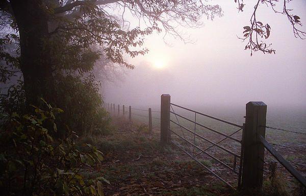 Autumn Mist Deborah Mantle Autumn Art Fine Art Fine Art America