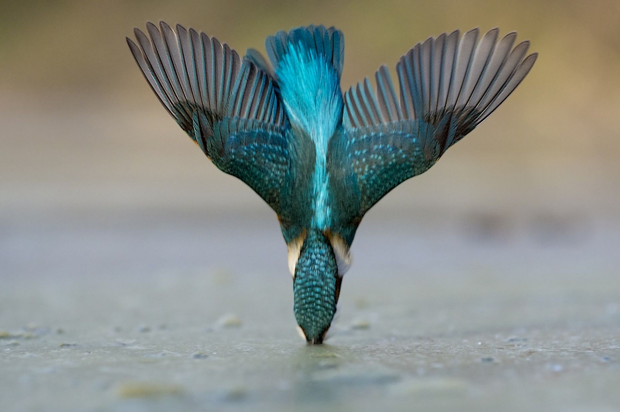 Pin by helinton fantin on photography pinterest wallpaper and bird