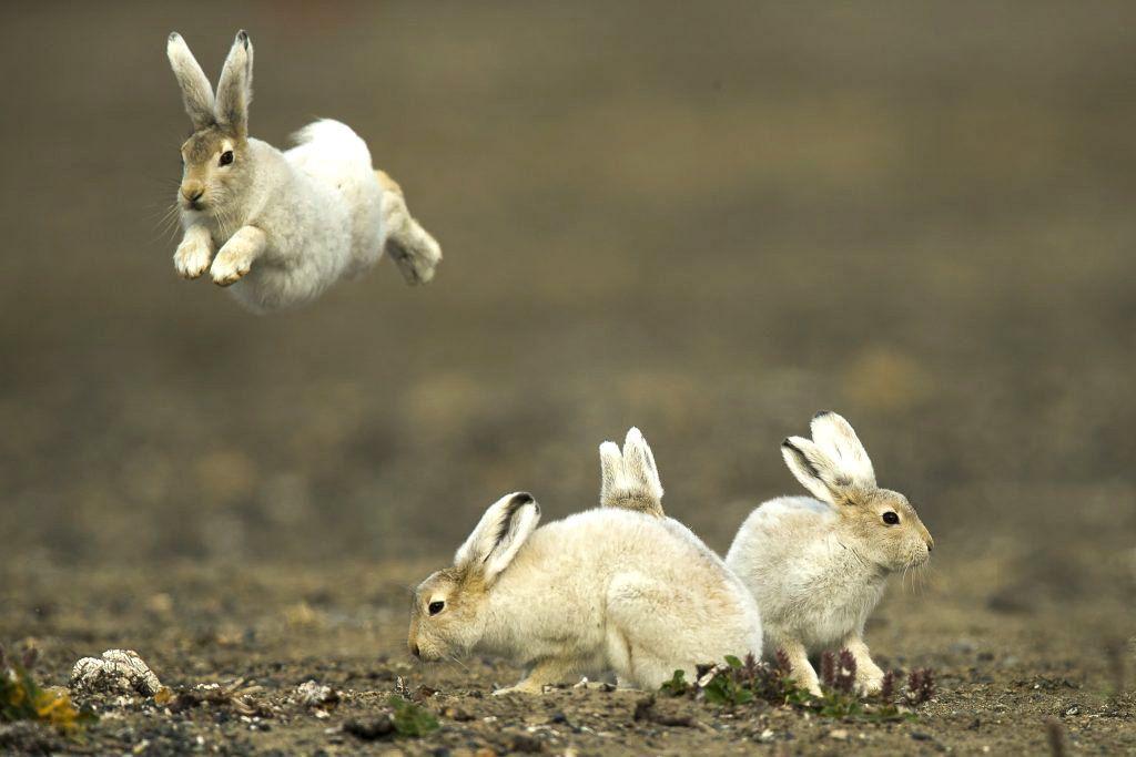 перекидные фото с тремя зайцами шлагбаума въезде садоводческое