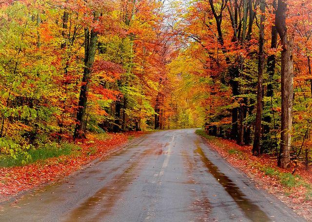 Autumn Road Traverse City Michigan Michigan Travel Traverse City Mi