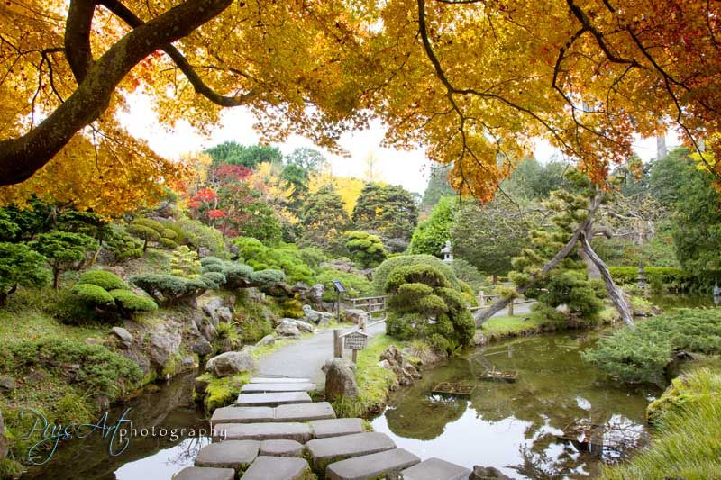 Japanese Tea Garden Autumn colors 2- San francisco | Wanderlust ...