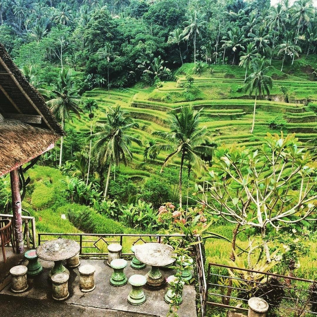 Wisata Alam Bali Tegalalang Ubud Tempat