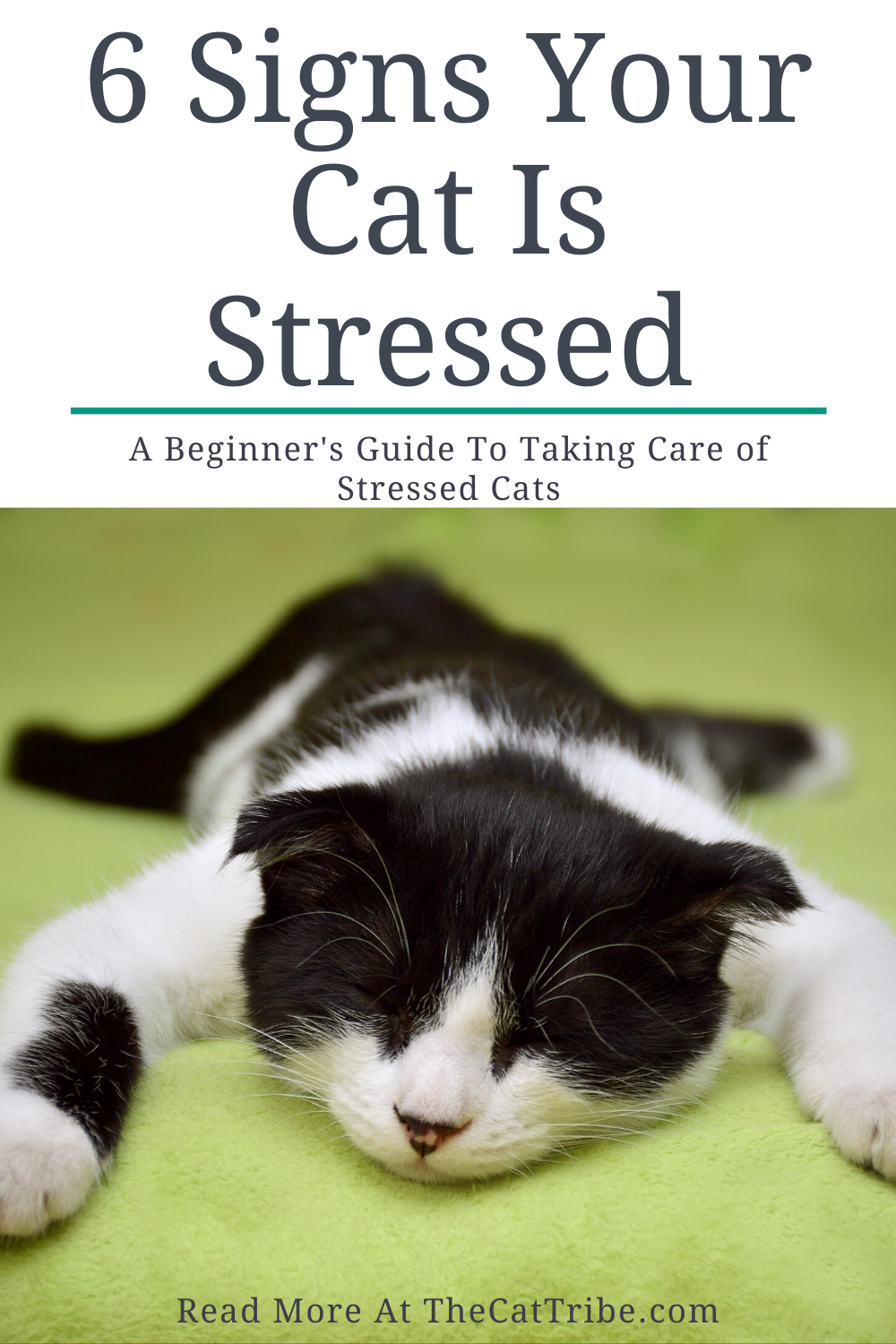 6 Signs Your Cat Is Stressed 3 Is A Shock The Cat Tribe Cats Cat Life Hacks Training A Kitten