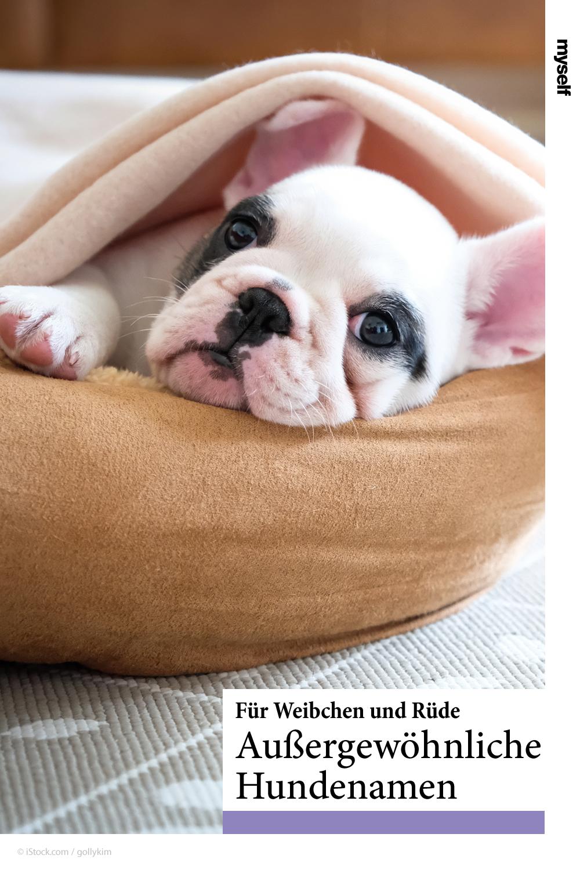 Schone Hundenamen Fur Ruden Hundinnen Welpen In 2020 Hundenamen Hunde Welpen Haustiere