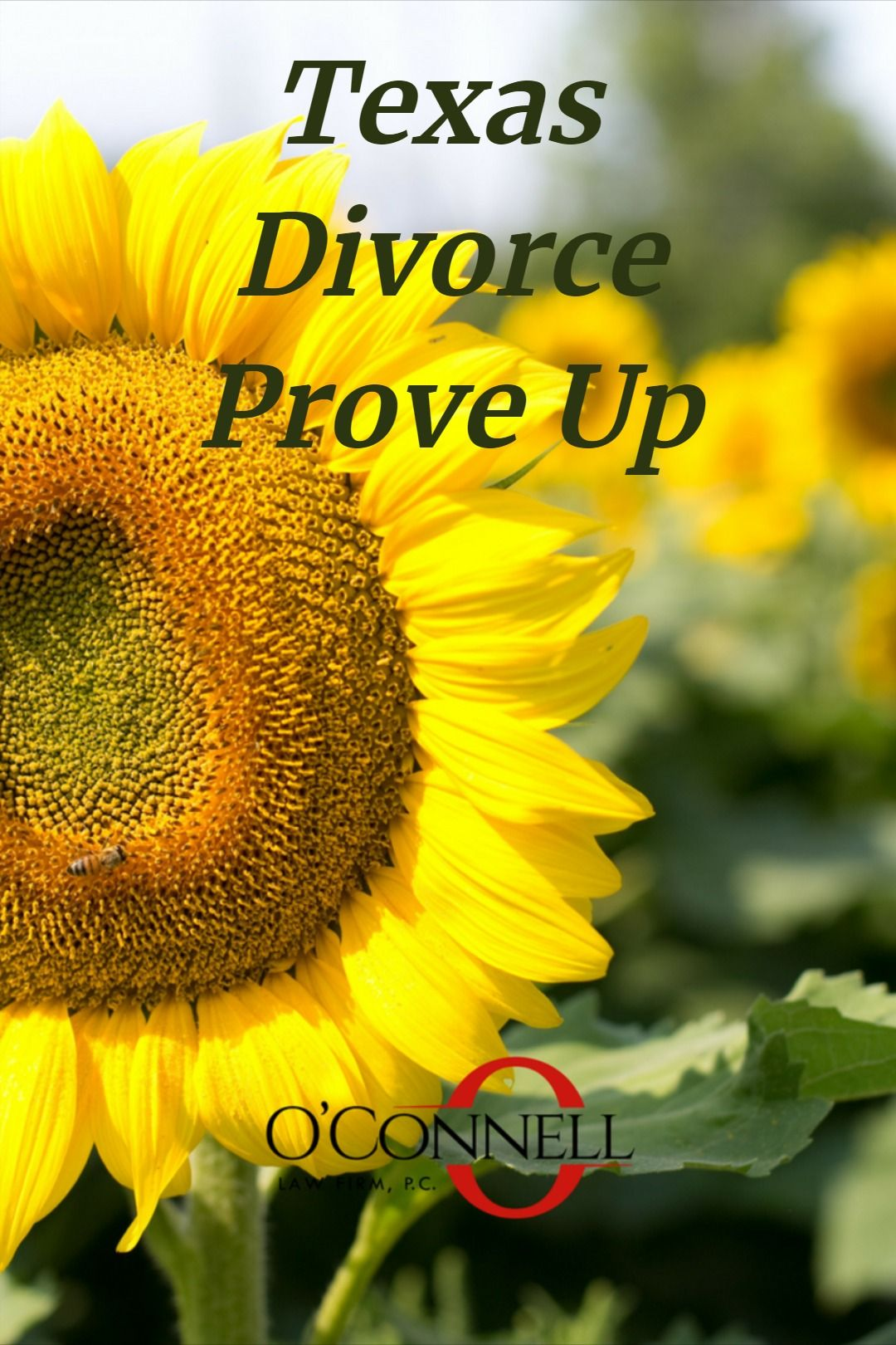 Find Out What You Need To Know For A Texas Divorce Prove Up
